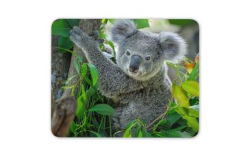 cute, koala, Mats, Office