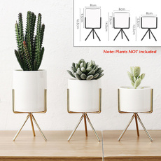 decoration, Plants, Ceramic, living room