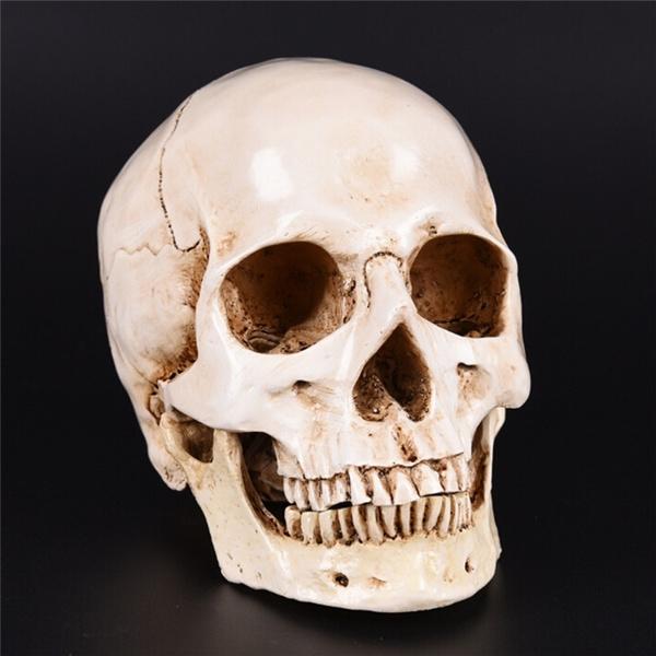hallowmassupplie, humanhead, Skeleton, skull