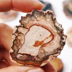 Fossils & Minerals, slice, polished, Minerals