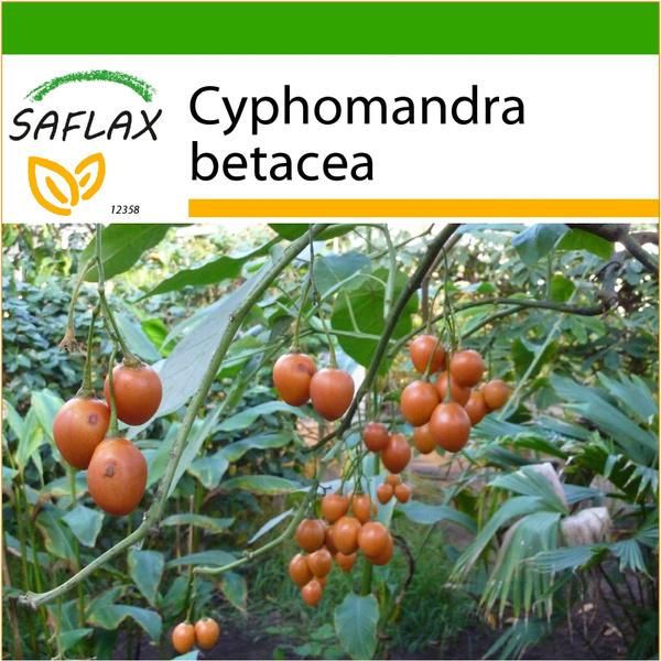 cyphomandra, Seed, Flowers