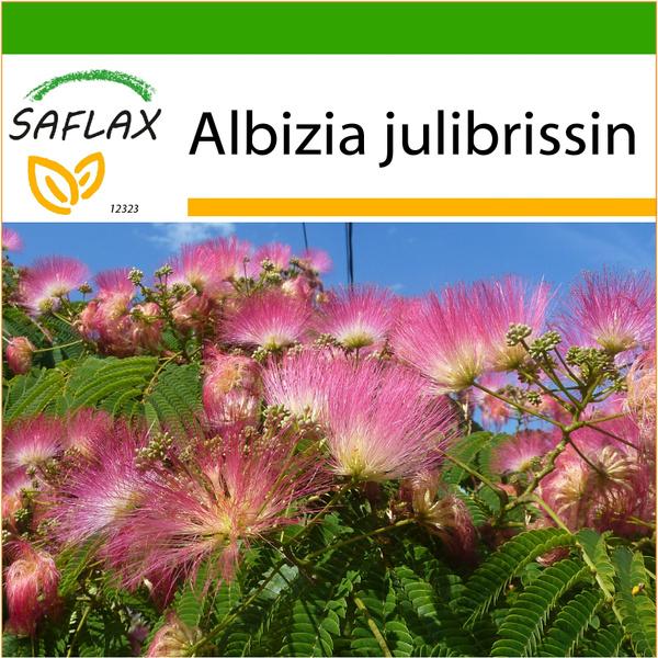 Seed, Flowers, albizia
