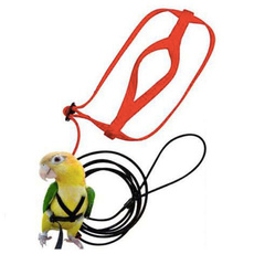 Fashion Accessory, Toy, Parrot, parrottoy