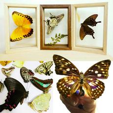 Beautiful, butterfly, diyphotoframe, butterflyspecimen