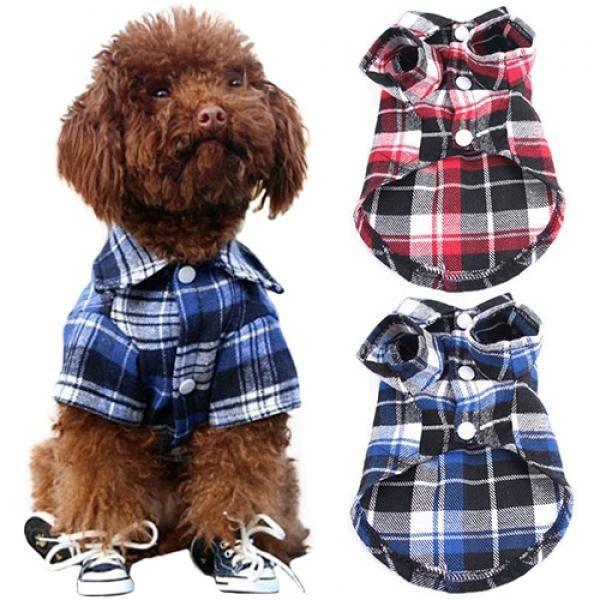 cute, Fashion, Shirt, Pets