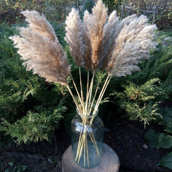 Beautiful, flowerbunch, pampasgras, Home Decor