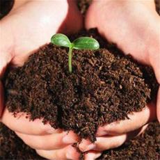 Bonsai, plantssoil, Plants, Gardening