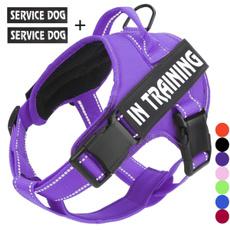 Training, Harness, Dog Collar, Vest