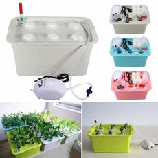 Box, planting, Plants, Garden