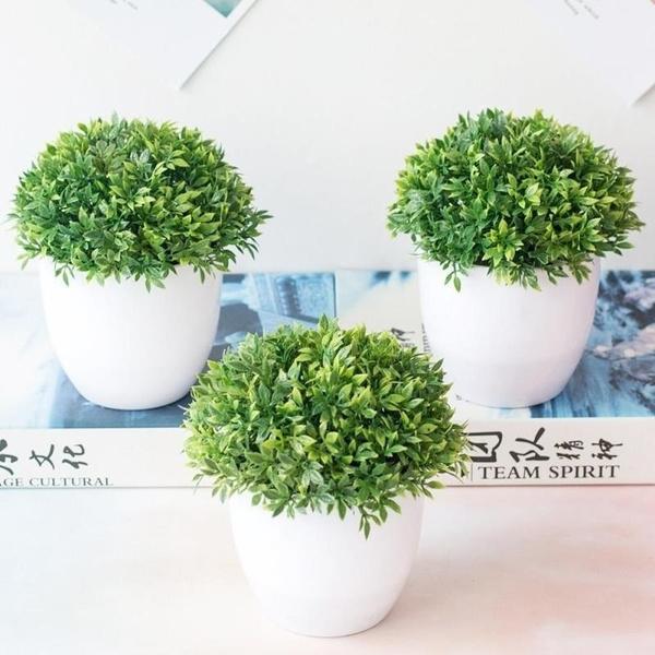 Bonsai, grassball, Plants, Flowers