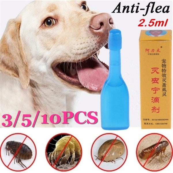 puppy, antiflea, petaccessorie, Pets