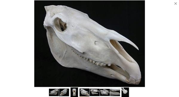 horse, horseskull, skull, horsehead