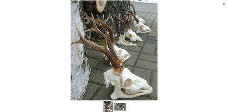 deerskull, buckdeerantler, Home Decor, skull