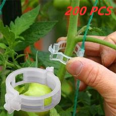Plants, useful, Garden, tomatoclip