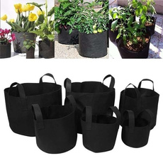 Plants, Flowers, Container, Family