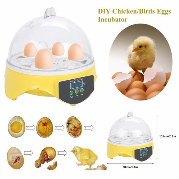 Kitchen & Dining, Capacity, eggpoacher, eggmachine