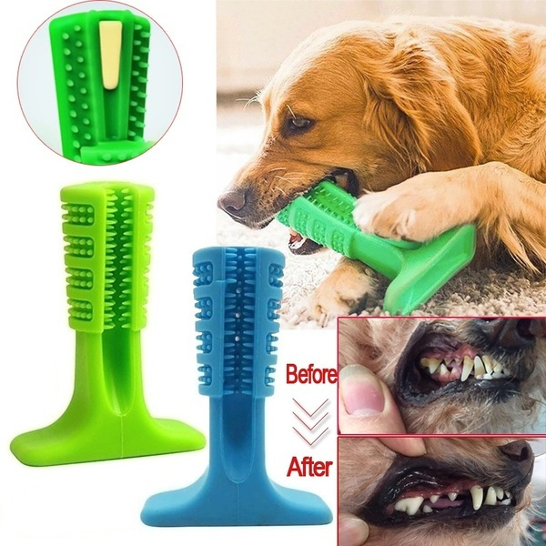 Pets, Dogs, Pet Toy, Toothbrush