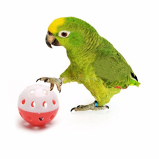 Bell, cute, Toy, Parrot