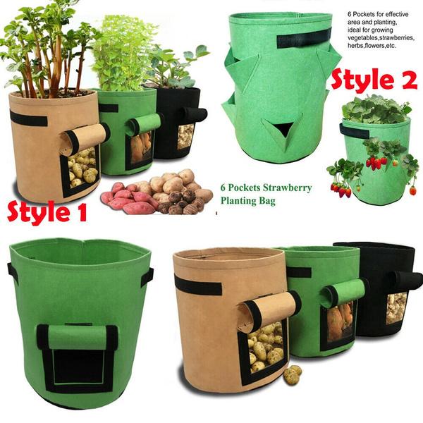 Plants, Outdoor, Garden, potatogrowbag