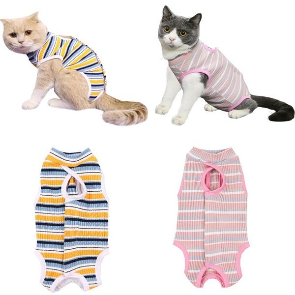 Clothes, Underwear, Shorts, petaccessorie