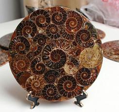 ammonite, Fossils & Minerals, Decor, Home Decor