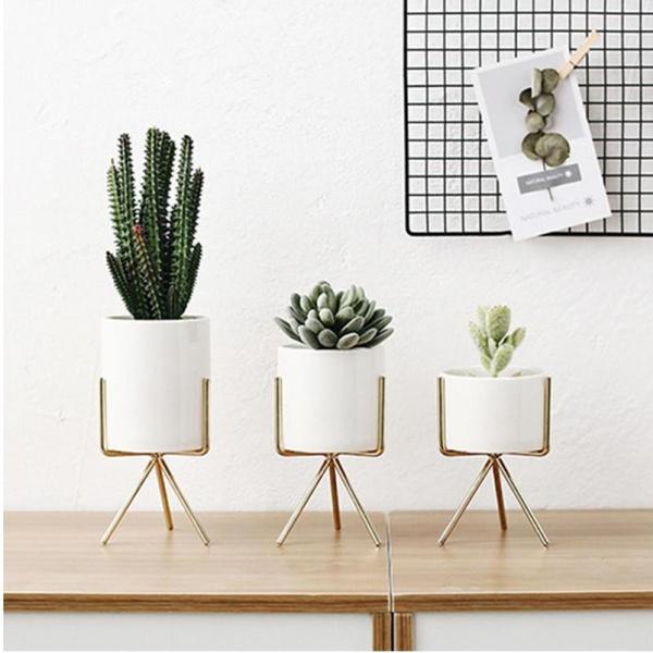 Plants, Ceramic, living room, hydroponic