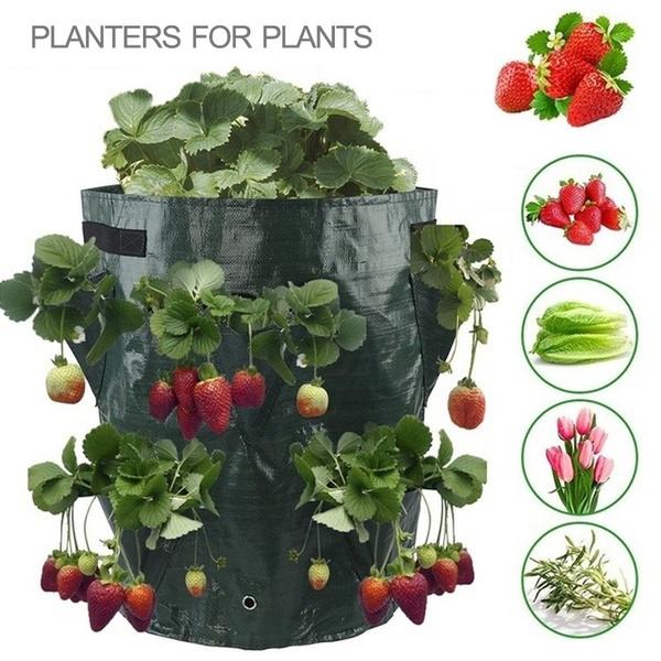 planting, seedsgrowbox, Gardening, Garden