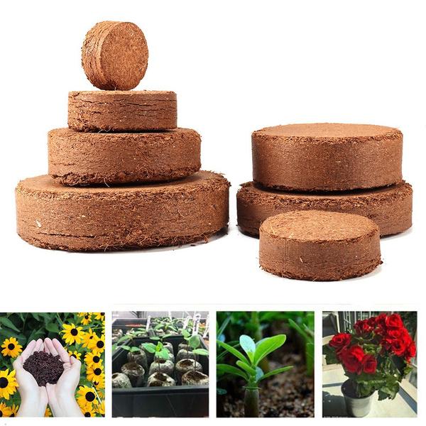Bonsai, seedlingsoil, Flowers, Garden