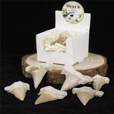 Shark, quartz, marinefossilspecimen, crystaldecor