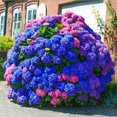 Bonsai, Plants, Flowers, Gardening