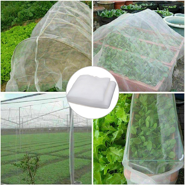 plantnet, Mini, Plants, insectnet