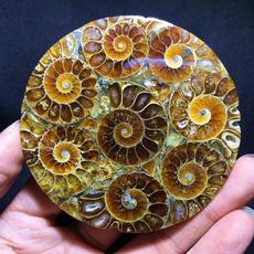 ammonite, Decor, shells, healingcrystal