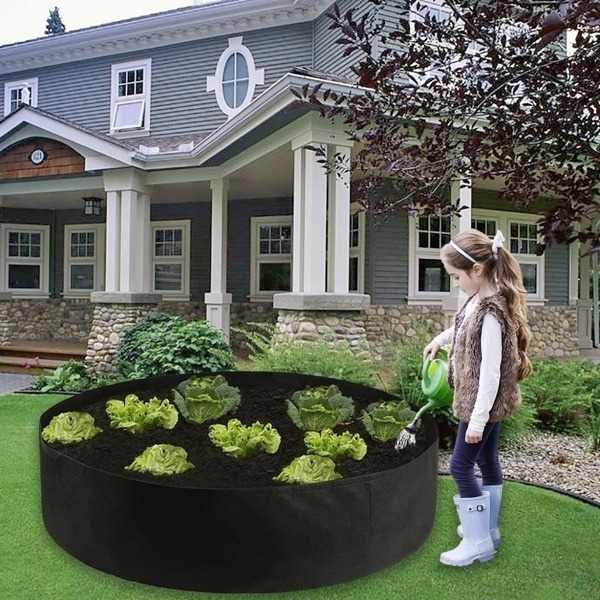 gardenaccessorie, flowersampplant, Flowers, Garden