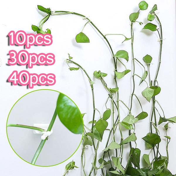 Plants, orchidclip, Clip, vinesfixingclip
