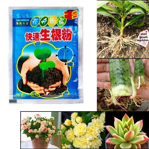 Bonsai, fertilizersmulche, Plants, Flowers