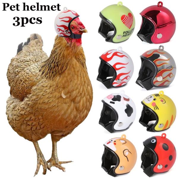 Funny, Fashion, Helmet, Pets