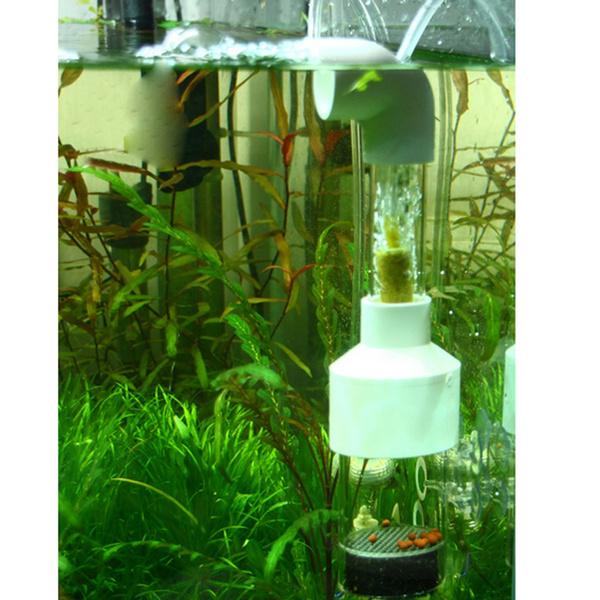 aquariums, fishaquarium, fryfisheggincubator, Family