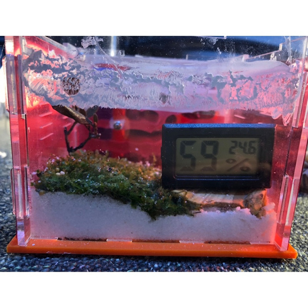 Turtle, incubator, hydroponic, terrariumreptile