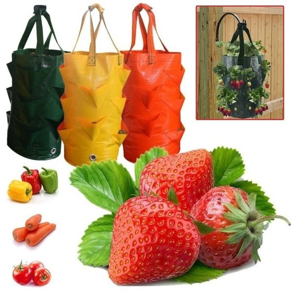 planting, Plants, flowerpotsplant, Gardening