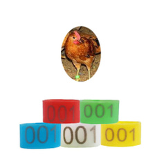 poultry, legring, Ring, hobbiespetaccessorie