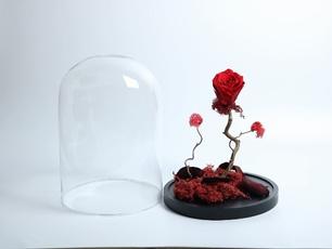 Rose, storeupload, Flowers, Red