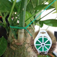 Plants, Gardening, Garden, Office