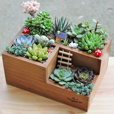 Box, Storage Box, Plants, Flowers