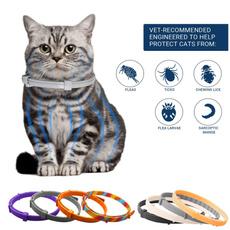 pet dog, Dog Collar, Pets, Pet Products
