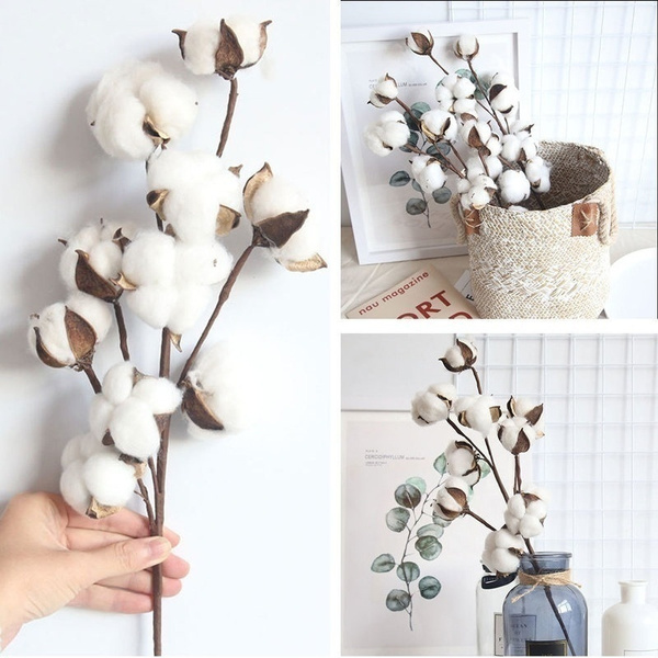 cottonball, cottonhead, Decor, Flowers