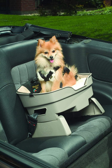 travelin, Good, Pets, Cars