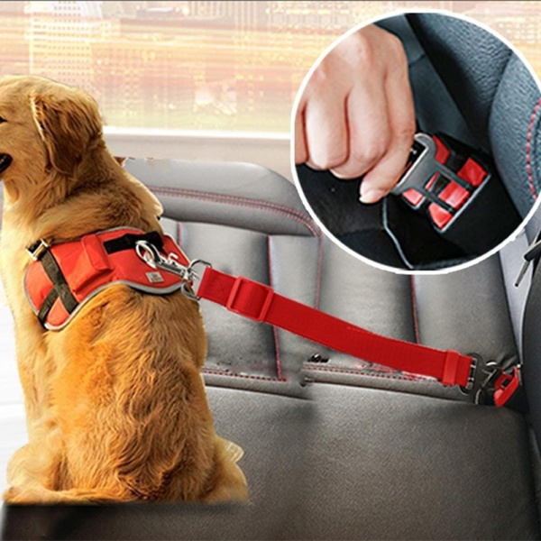 Fashion Accessory, Fashion, seatbelt, puppy