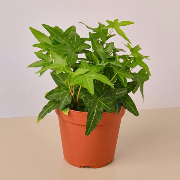sizesmall4pot, lightlowlight, houseplant, Pot