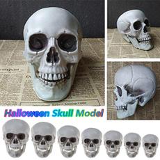 skullmodel, scary, skull, Gifts
