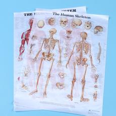 musculoskeletalpicture, musclefigure, decorativepaintingformedical, Posters